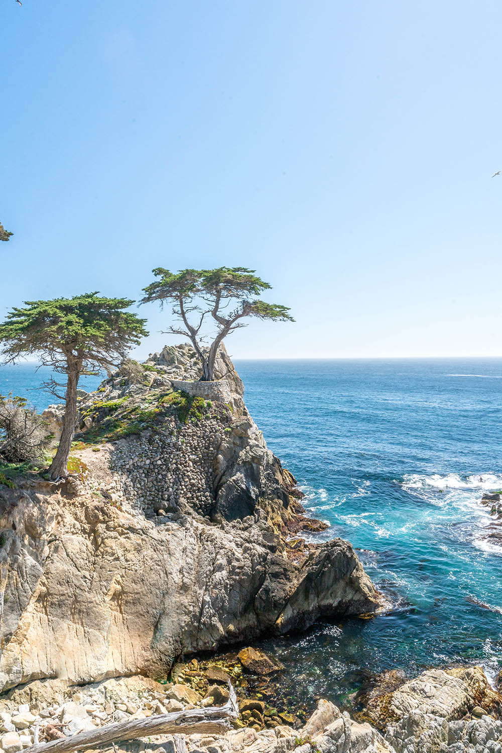 What to do in Monterey with Kids: 17 Mile Drive