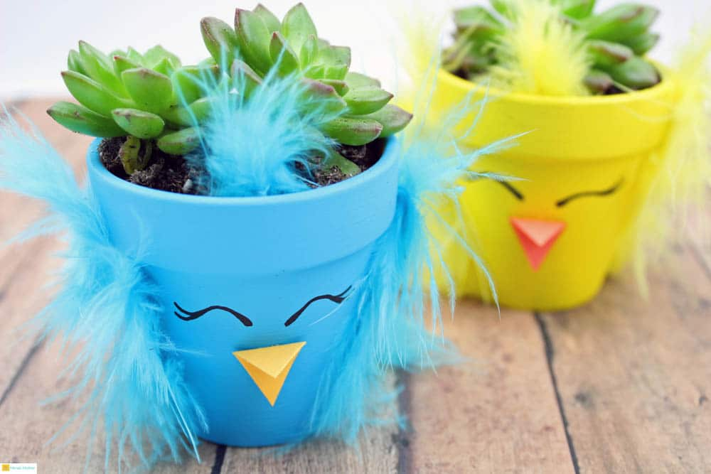 Spring Chick Succulent Planters Meraki Mother Craft for kids