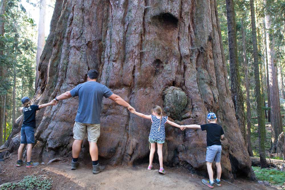 Sequoia National Park: What to do with kids.