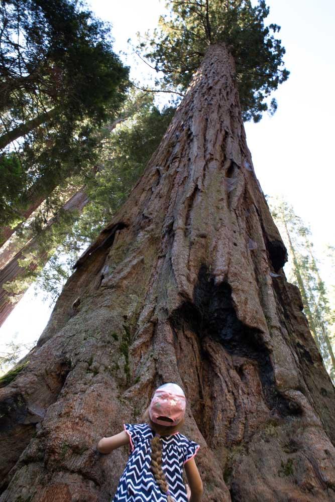 Sequoia NP With Kids Meraki Mother