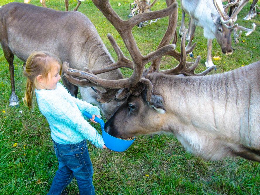 See Reindeer in Finland