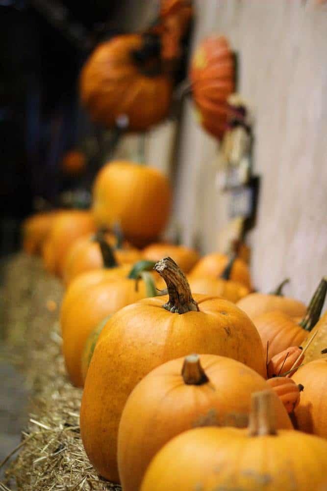 Pumpkin toss halloween game for kids