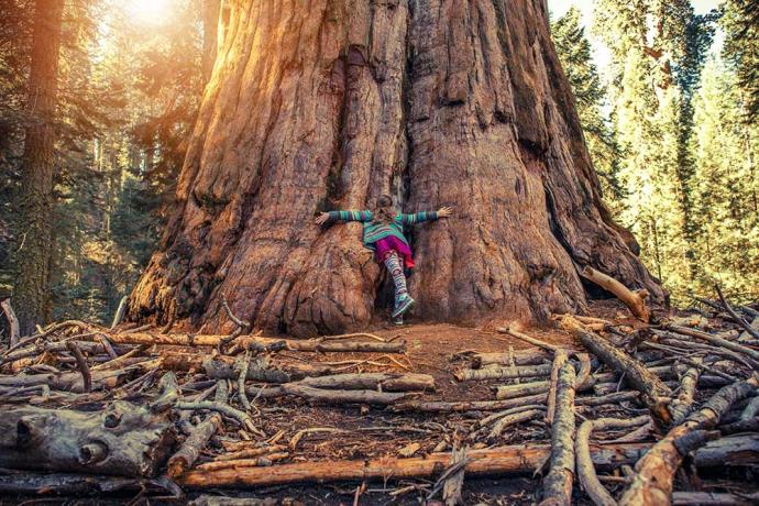 Things to do in Sequoia National Park With Kids